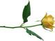 В Женский день дарю цветы
